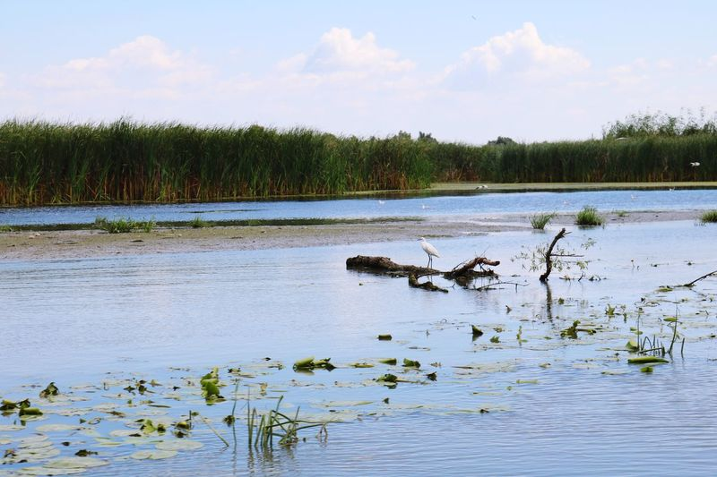 Water Nature Lake Sky Beauty In Nature No People Cloud - Sky Animal Themes Plant Grass Animals In The Wild Tree Outdoors Tranquility Scenics Growth Day Bird Hippopotamus Mammal