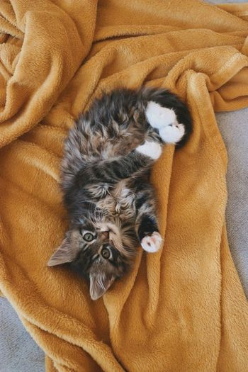High angle view of cat resting