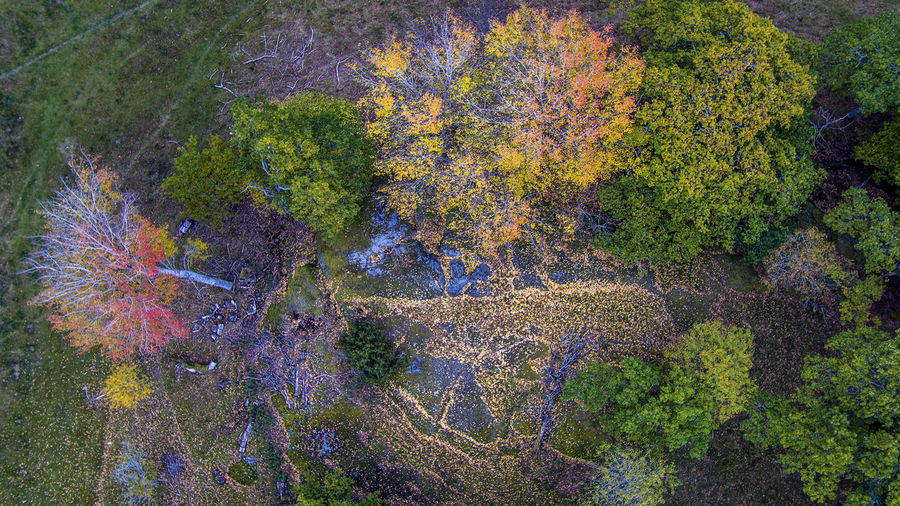 The leaves have left 16x9 Abstract Aerial Photography Aerial Shot Aerial View Autumn Autumn Colors Autumn Leaves Day Drone  Dronephotography Fall Fall Beauty Fall Colors Landscape Multi Colored No People Outdoors Sweden Sweden Nature Textured