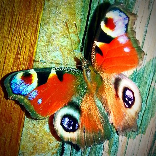 Butterfly ColourOFlife Hi World Animal Photography ♡♥☆★ Check This Out ▲▼▶◀