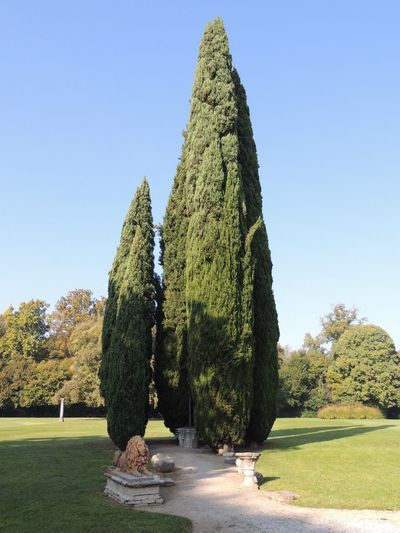 Tree Green Color Growth Day Clear Sky Topiary Nature No People Grass Beauty In Nature EyEmNewHere Tranquility Sky Ville Venete, Nature Grass Tree Mirano Italy Perspectives On Nature