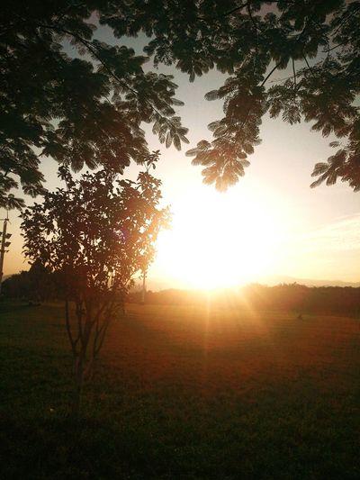 Tree Sun Sunset Sky First Eyeem Photo Second Acts