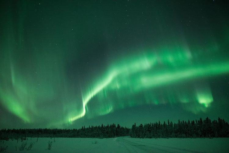 Chasing the green dragon Beauty In Nature Night Green Color Cold Temperature Winter Snow Space Sky Tranquility Astronomy Tranquil Scene No People Star - Space Aurora Polaris Nature Power In Nature North Northern Lights Forest Lapland, Finland Landscape Outdoors Atmospheric Mood Scenics Hanging Out