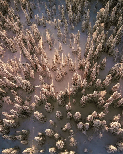 drone shot of winter forest EyeEm Selects Winter Fir Tree Drone Photography Drone  Pine Woodland Backgrounds Sunlight Full Frame Sky Close-up Calm Scenics Idyllic Tranquility Tranquil Scene Remote Non-urban Scene Beauty In Nature Countryside Rocky Mountains Shining