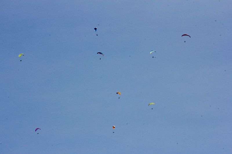 Paragliders enjoying life Paragliding Flying Blue Low Angle View Sky Mid-air Nature Day Adventure Beauty In Nature Scenics - Nature No People Freedom Tranquility Extreme Sports Outdoors Vertebrate Sunny