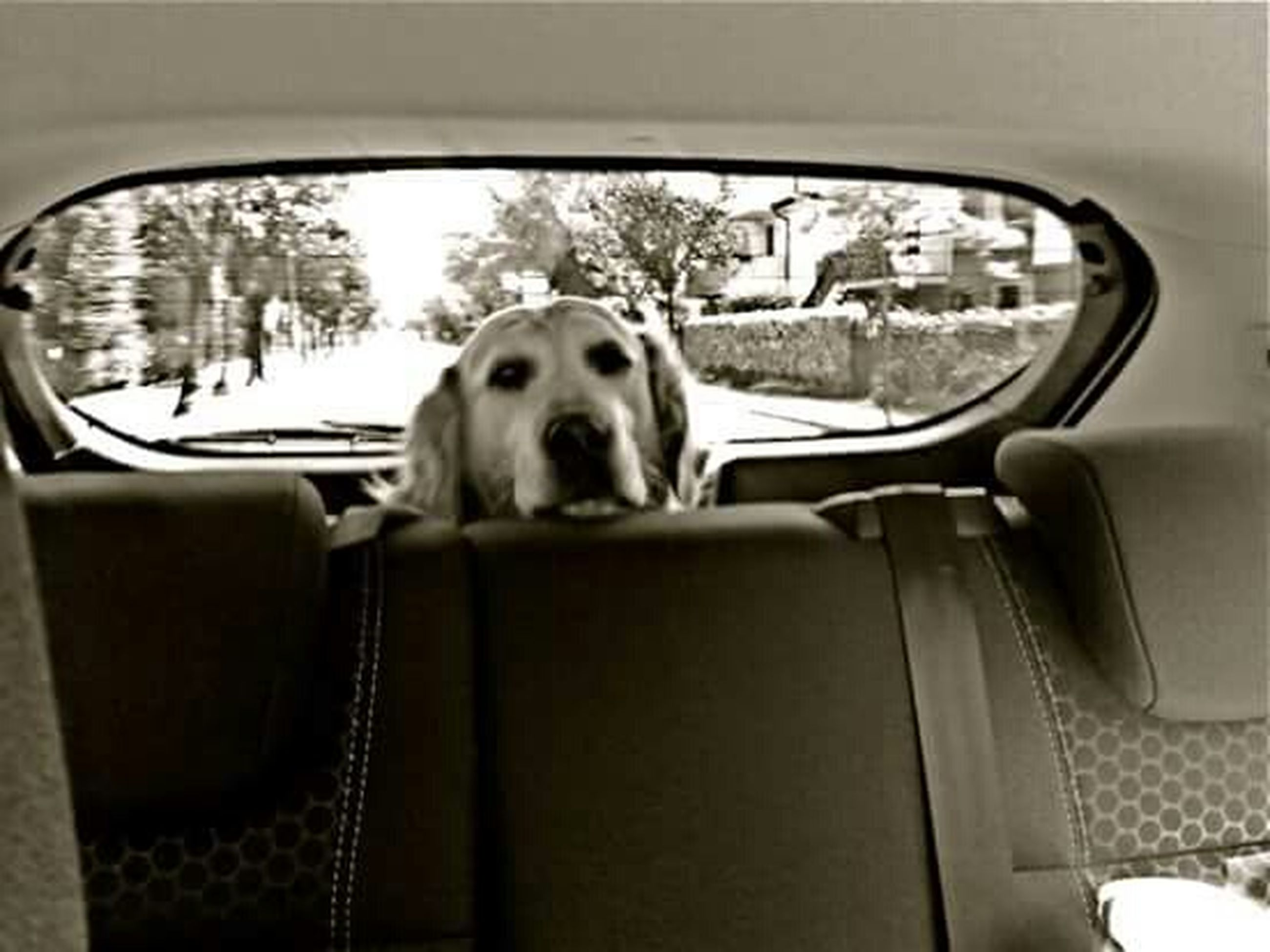animal themes, one animal, domestic animals, pets, window, transportation, dog, indoors, vehicle interior, mammal, mode of transport, car, land vehicle, sitting, glass - material, looking through window, transparent, car interior, relaxation, day