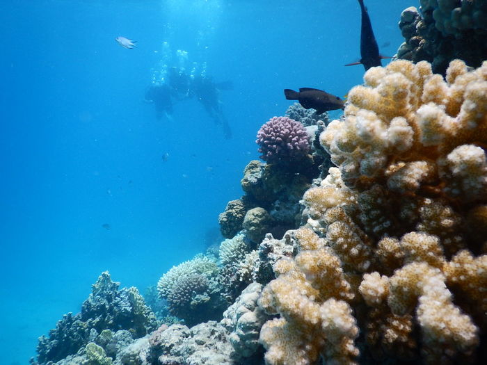 Animal Themes Animal Wildlife Animals Animals In The Wild Beauty In Nature Blue Close-up Coral Diving Hughada Me Nature Plants 🌱 Real People Scenics Scuba Diving Sea Sea Life UnderSea Underwater Underwater Photography Water Waterreflections  Wet Ägypten Red Sea
