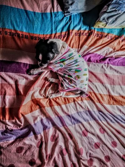 Rainy days. Urban Minimalism Visual Creativity Peach Colorful Animal EyeEmNewHere EyeEm Best Shots EyeEm Gallery EyeEm Selects EyeEmBestPics Shadow Dog Bedroom Bed Sheet Multi Colored Textile Backgrounds Close-up Cloth Blanket Mattress Textured  Focus On Shadow Fabric Wrapped In A Blanket Long Shadow - Shadow Carpet Rough The Still Life Photographer - 2018 EyeEm Awards