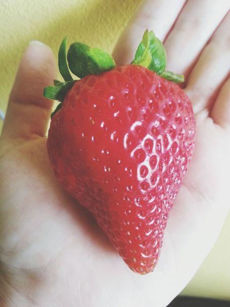 Strawberry IsMyLife Yum Fruit