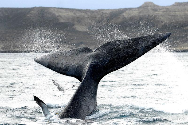 Oceano Animal