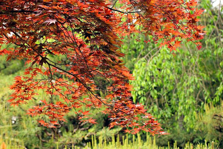 Autumn leaves on tree in forest
