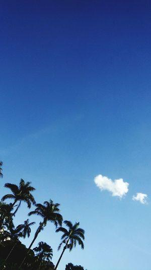 🌟 Tree Palm