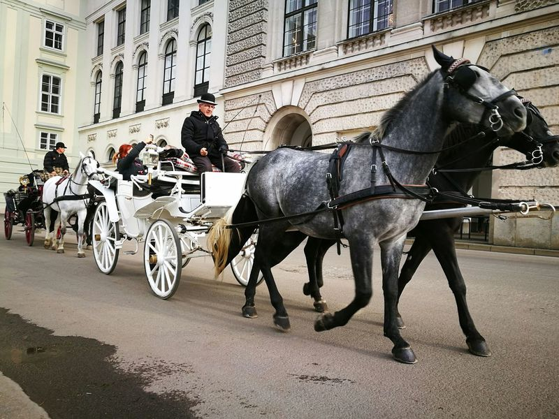 Horse Horsedrawn Working Animal Domestic Animals Horse Cart Transportation City Building Exterior Carriage Street Outdoors Travel Destinations Traveling Travel Photography Erasmus Photo Diary Viena, Austria Built Structure Classic Car Classic City Building Architecture Day