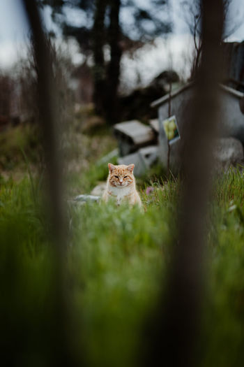 Cat Cats Cat Lovers Nature Tranquility Home Pets Pet Selective Focus Grass No People Mammal Day Land Outdoors One Animal Animal Themes Animal Green Color Surface Level Focus On Background