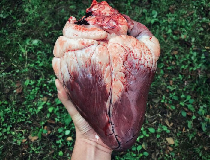 Cropped hand holding heart over field