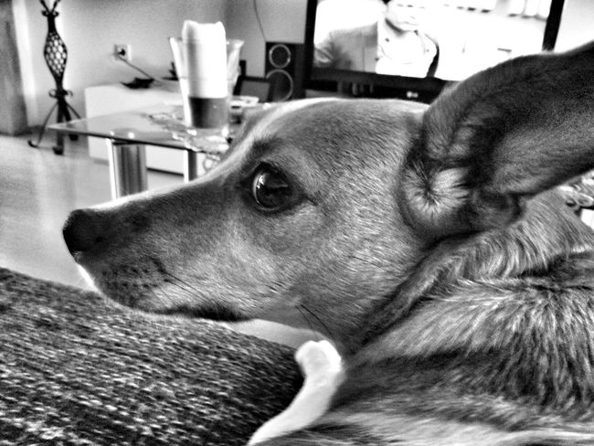 Kleine Amy Dog Relaxing