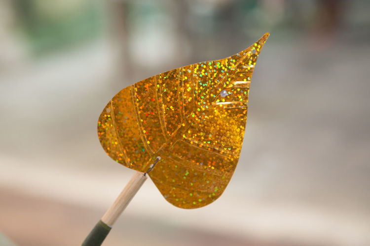 Close-up of dried leaf on yellow leaves