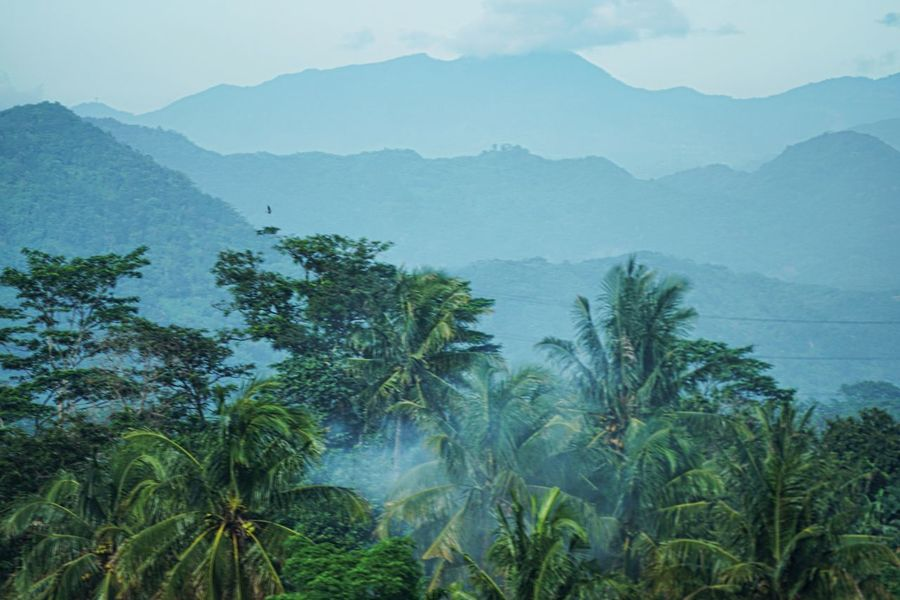 Cocconut trees Coconut Trees Mountain Nature Landscape Scenics Beauty In Nature Fog No People An Eye For Travel
