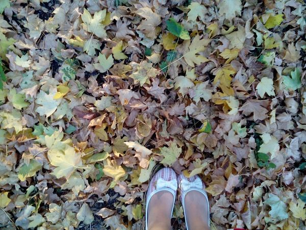 Autemn Yellow Yellow Foliage Popular Photos Ballet Shoes Fall Beauty