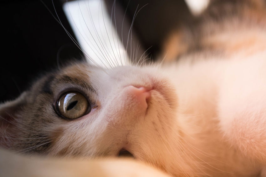 Animal Themes Close-up Day Domestic Animals Domestic Cat Feline Indoors  No People One Animal Pets EyeEmNewHere