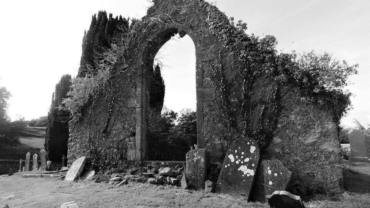 tree, history, day, old ruin, ancient, no people, nature, outdoors, architecture, ancient civilization, sky