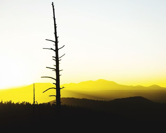 Silhouette tree on landscape against sky at sunset