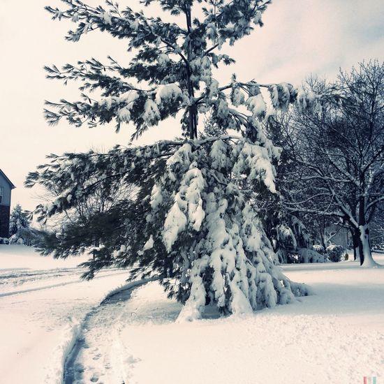 Trees Snowing