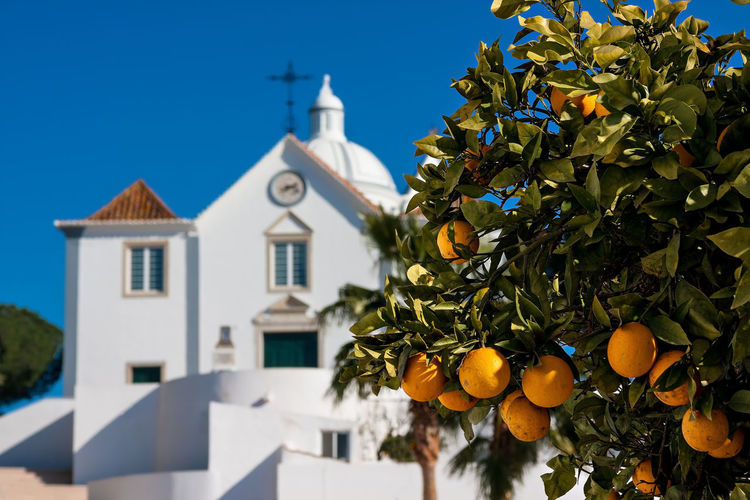 Orange Tree and
