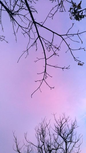 EyeEmNewHere Pink And Blue Pink Color Unusual Beauty Naturelovers Park Beautifull Nature Daylight Daynight Evening Sky Unusual Pink Day