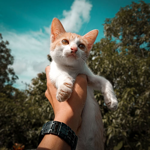 Low section of person with cat against sky