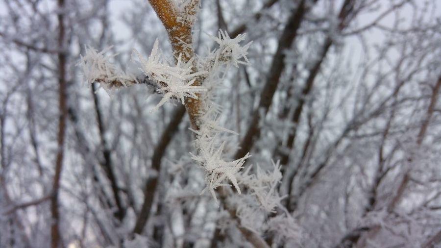 Showcase: February Frozen Fargo Cold Winter ❄⛄ Winter Wonderland Freezing ❄ Frosty Mornings Cold Temperature Fargo Frost Cold Winter