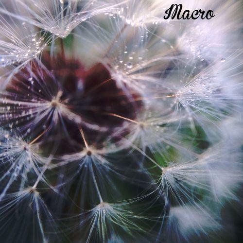 Olloclip_macro Macro Photography Photo Simplicity
