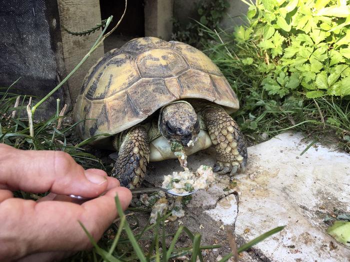 Turtle Reptile