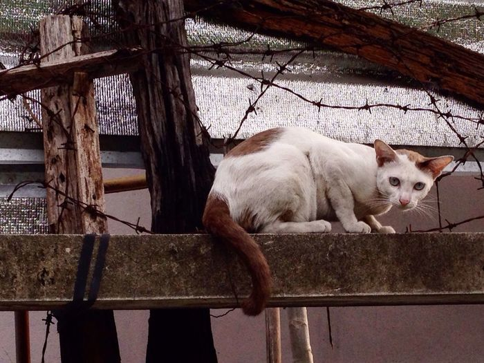 Portrait of stray cat against barbed wire fence