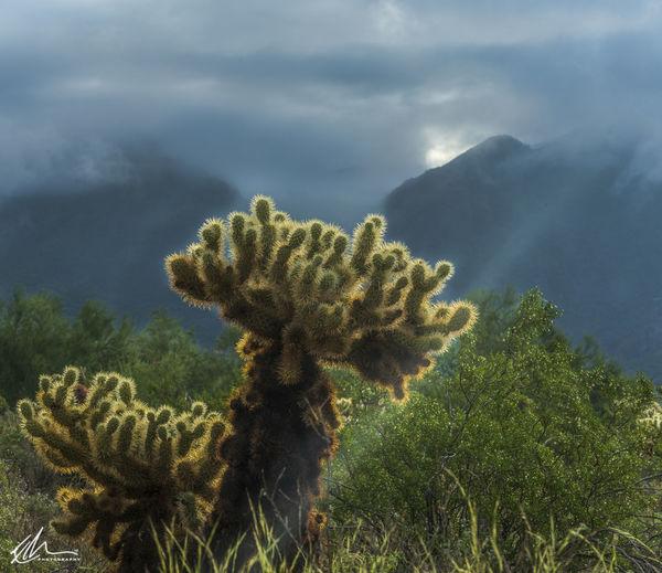 Close-up of cactus plant against sea
