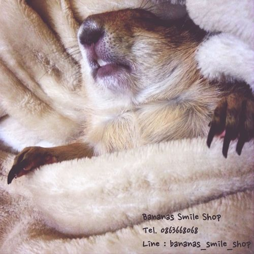 Asleep Prairiedog Prairie Dogs Bedtime