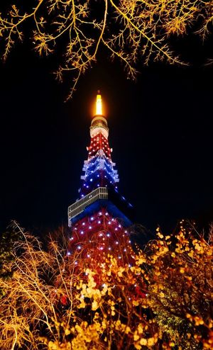 Tokyo tower at night Night Illuminated Low Angle View Tree Architecture Travel Destinations Tower Tokyo Tower Tokyo Tokyo Night Built Structure Building Exterior Outdoors Sky Branch