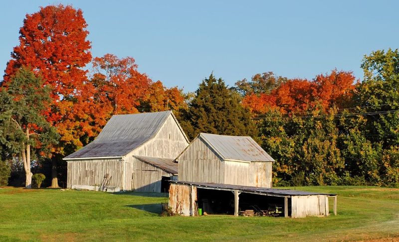 Midwest United States Barns in Autumn. Architecture Autumn Autumn Barn Beauty In Nature Blue Building Exterior Built Structure Change Clear Sky Field Green Color Growth House Multi Colored Nature No People Non-urban Scene Orange Color Outdoors Scenics Season  Tranquil Scene Tranquility Tree