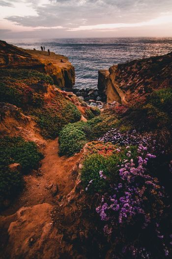 Cliffside Bloom. Sea Horizon Over Water Nature Scenics Water Sunset Beauty In Nature Cliff Sky Cloud - Sky Outdoors No People Beach Tranquility Landscape Travel Destinations Day Architecture