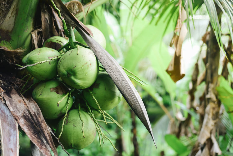 Coconut on the