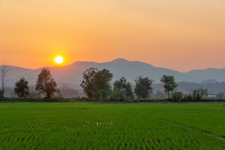 Landscape of Green rice field with mountain on background in sunset Beauty In Nature Sunset Scenics - Nature Landscape Plant Tranquil Scene Tranquility Environment Sky Green Color Field Land Rural Scene Tree Mountain Orange Color Agriculture Growth Idyllic Non-urban Scene Sun No People Farm Mountain Range Outdoors