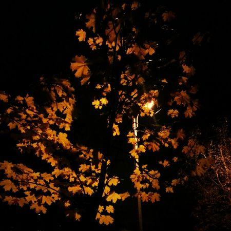 Black&Yellow , Autumn , Foreveralone