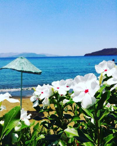 Datça Nature Seaside Summer Views Check This Out Photography