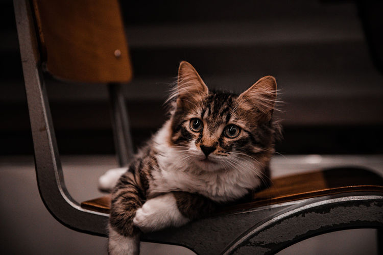 Portrait of a cat sitting on chair