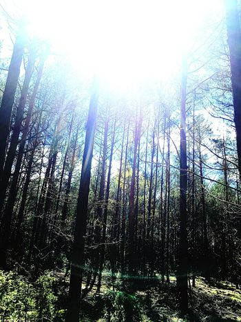 Forest Nature Beauty In Nature WoodLand No People Day Sky Check This Out Suun🌞 Sunlight Trees