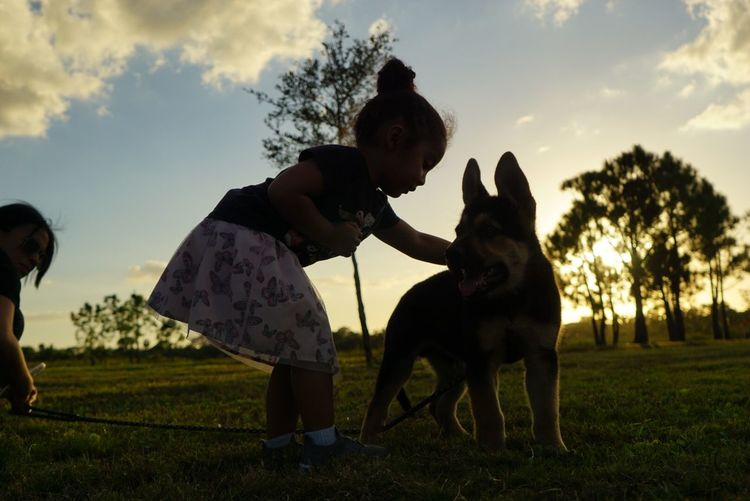 Sky Dog Canine