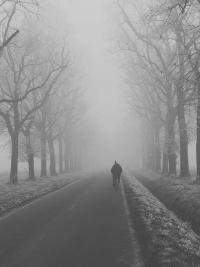 Rear view of person walking on road amidst bare trees during winter