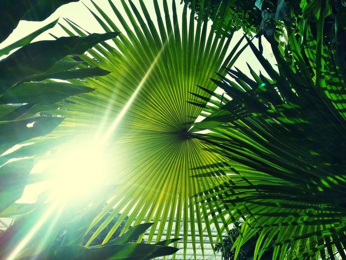 Living life in tropical zone Sunlight Palm Mobile Photography Green Tropical Tree Botanical Garden