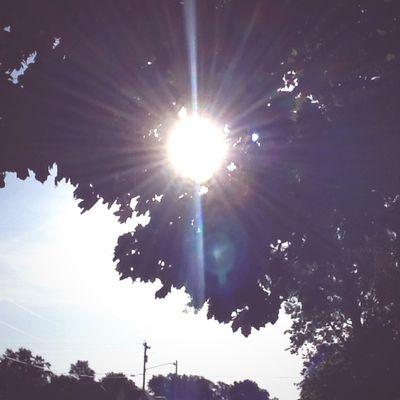 Beautiful Lighting Trees Leaves Summer Morning