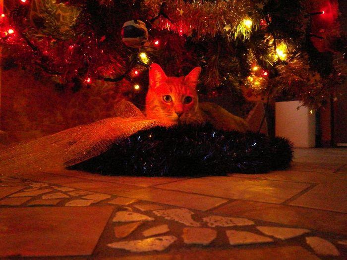 bastet sotto l'albero Bastet Gatto Natale  Parma EyeEm Ready   AI Now